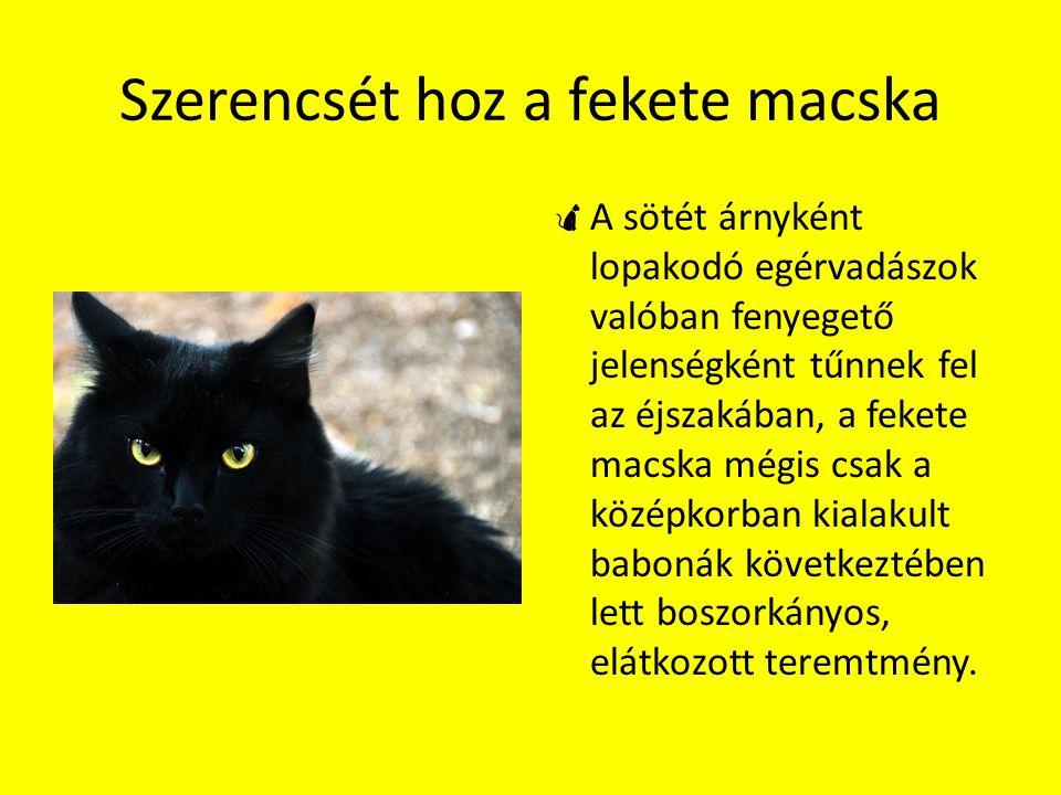 Szerencsét hoz a fekete macska  A sötét árnyként lopakodó egérvadászok valóban fenyegető jelenségként tűnnek fel az éjszakában, a fekete macska mégis