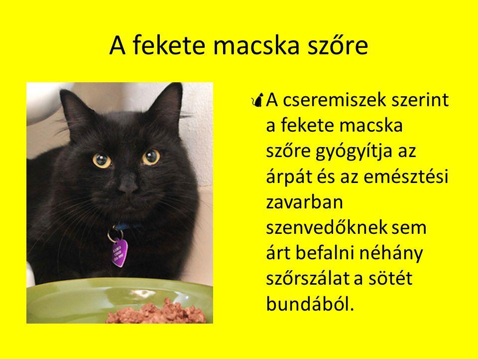 A fekete macska szőre  A cseremiszek szerint a fekete macska szőre gyógyítja az árpát és az emésztési zavarban szenvedőknek sem árt befalni néhány sz