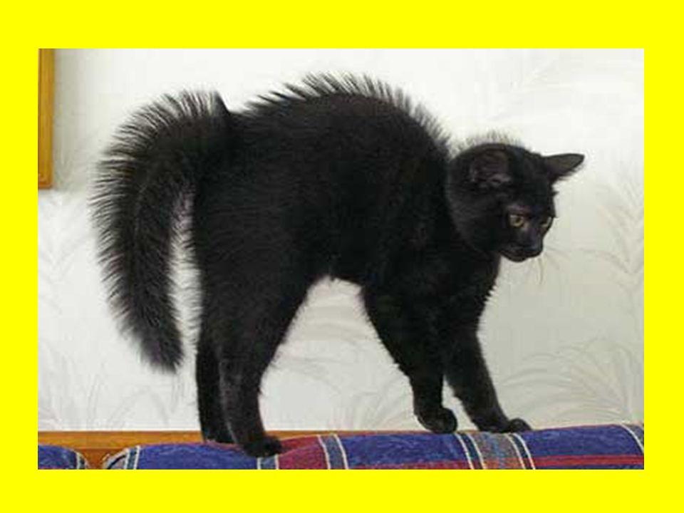 Fekete macska vicc Az iskolában a tanár néni megkérdezi a gyerekektől, hogy ki babonás.
