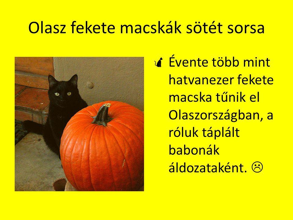 Olasz fekete macskák sötét sorsa  Évente több mint hatvanezer fekete macska tűnik el Olaszországban, a róluk táplált babonák áldozataként. 