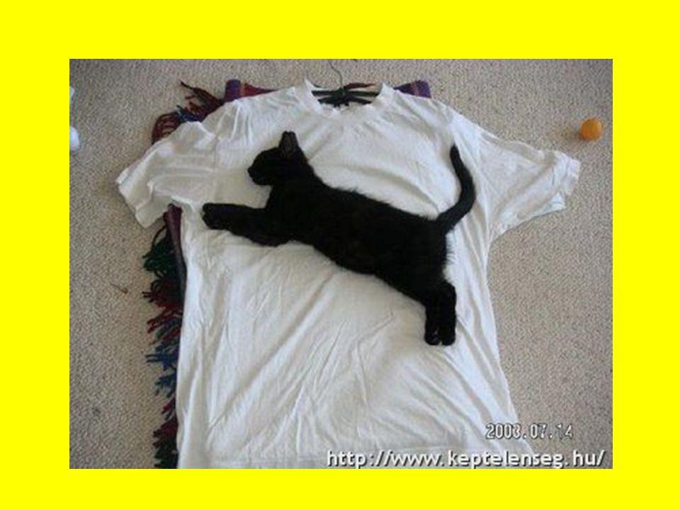 """""""Minden fekete macska voltaképpen átváltozott boszorkány. /Edgar Allan Poe/"""