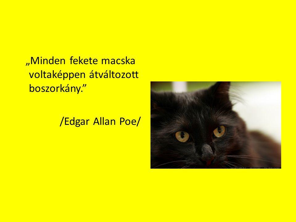 """""""Minden fekete macska voltaképpen átváltozott boszorkány."""" /Edgar Allan Poe/"""