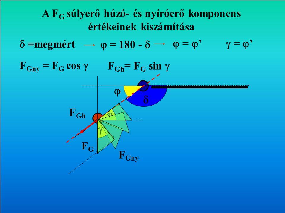    =mért  = 180 -  A végtagok súlyerejének hatása az ízületekre FGFG F Gny F Gh Transzverzális sík 