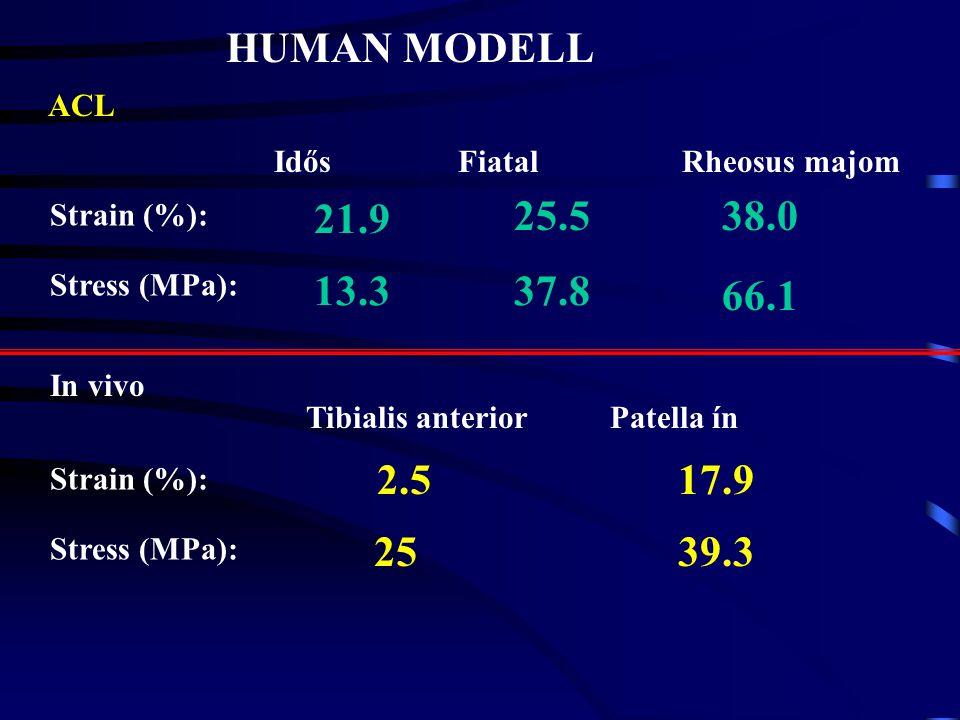 ÁLLAT MODELL Megnyúlás: Stress : Sertés digital extensor és flexor ín Shadwick (1990) 7-9 % 16 MPa Újszülött Felnőtt 17%, 40-90 MPa