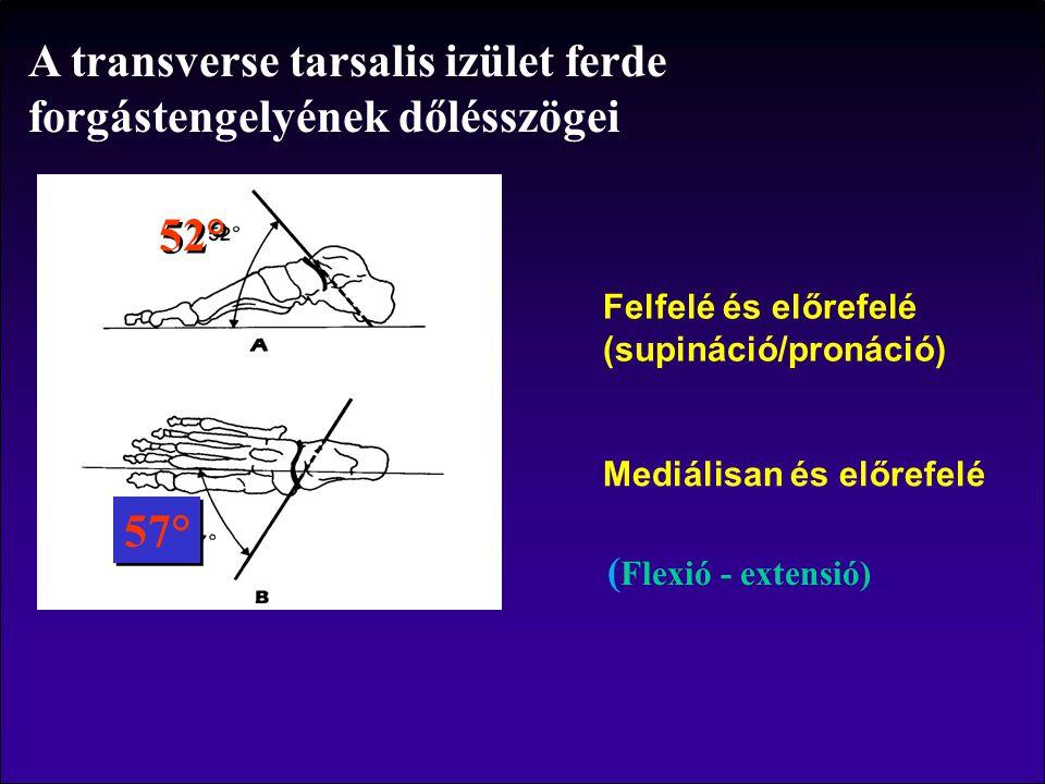 A transverse tarsalis izület ferde forgástengelyének dőlésszögei 52° 57° ( Flexió - extensió) Felfelé és előrefelé (supináció/pronáció) Mediálisan és előrefelé