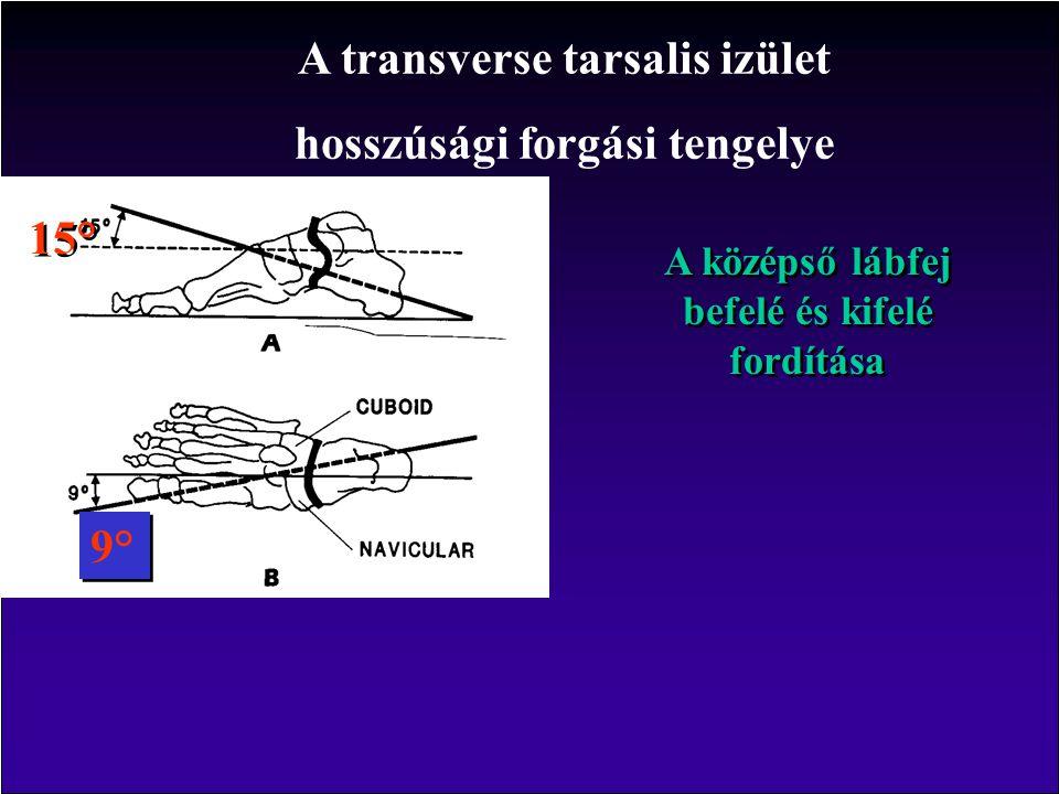 A középső lábfej befelé és kifelé fordítása A transverse tarsalis izület hosszúsági forgási tengelye 15° 9°