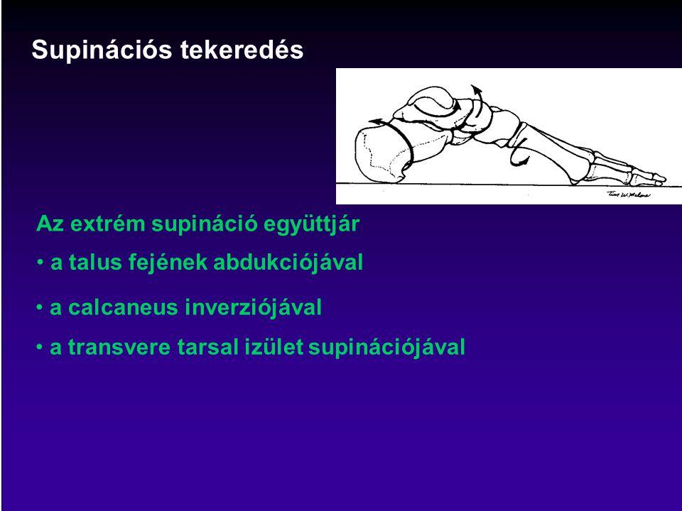 Az extrém supináció együttjár Supinációs tekeredés a talus fejének abdukciójával a calcaneus inverziójával a transvere tarsal izület supinációjával