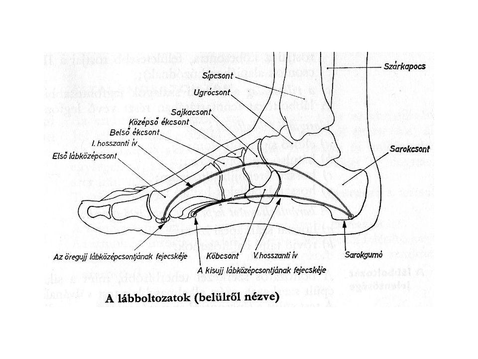 A lábboltozat