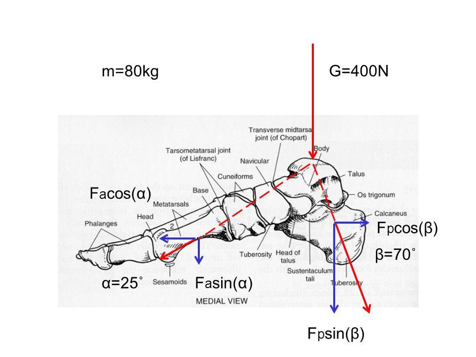 m=80kg G=400N β=70˚ α=25˚F a sin(α) F p sin(β) F a cos(α) F p cos(β)
