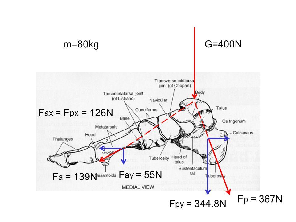 m=80kg G=400N F a = 139N F ay = 55N F p = 367N F py = 344.8N F ax = F px = 126N