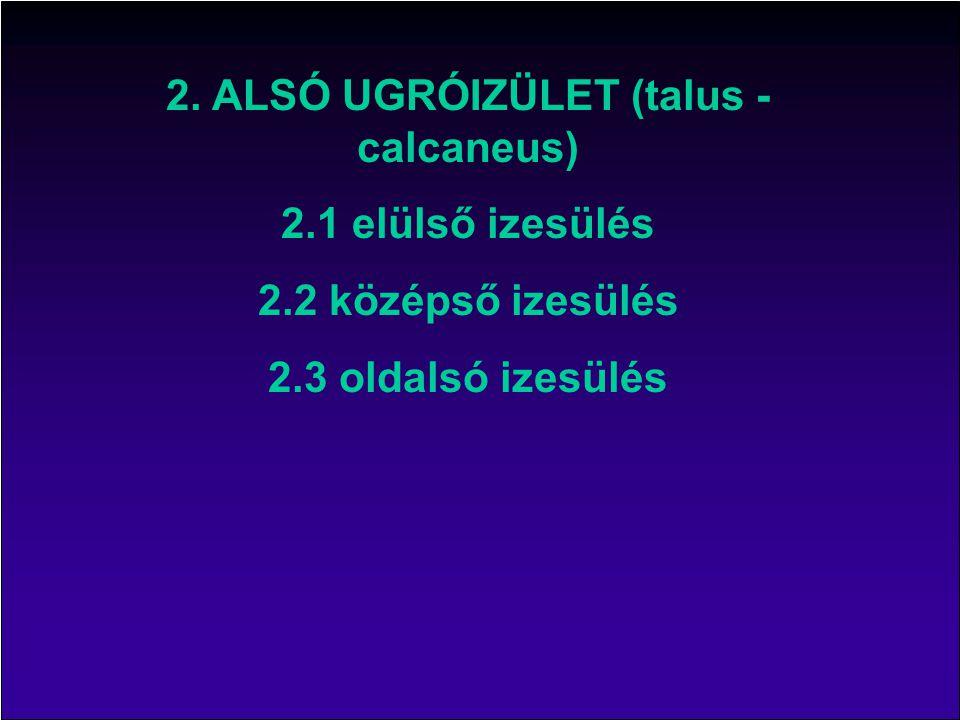 Talus ugrócsont Calcaneus sarokcsont Navicular sajkacsont Cuboid köbcsont subtalar-talocalcaneal ugró-sarokcsonti iz.