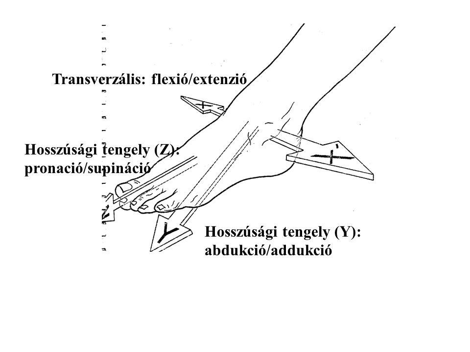 Transverzális: flexió/extenzió Hosszúsági tengely (Y): abdukció/addukció Hosszúsági tengely (Z): pronació/supináció