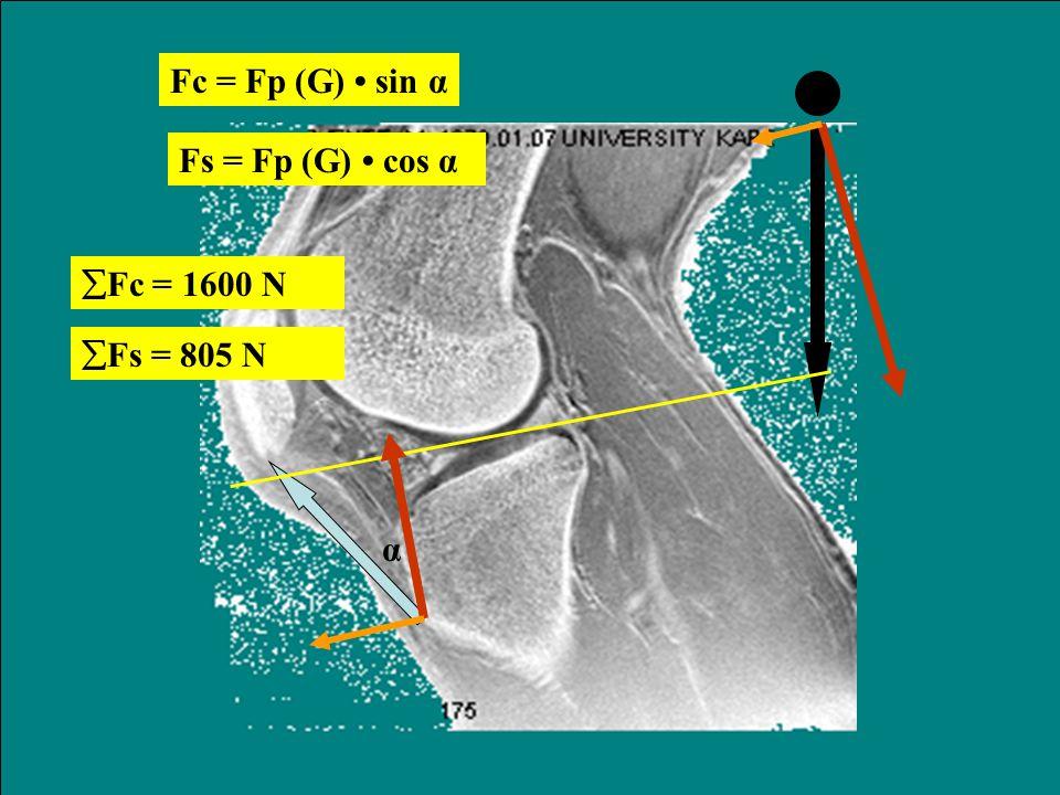 Nyomóerő a térdizületben hajlított térdű állás közben A patella ínra eső húzóerő (F p ) FqFq FpFp G kpkp kGkG ha akkor Nyomóerő (F ny ) F ny A fenti s