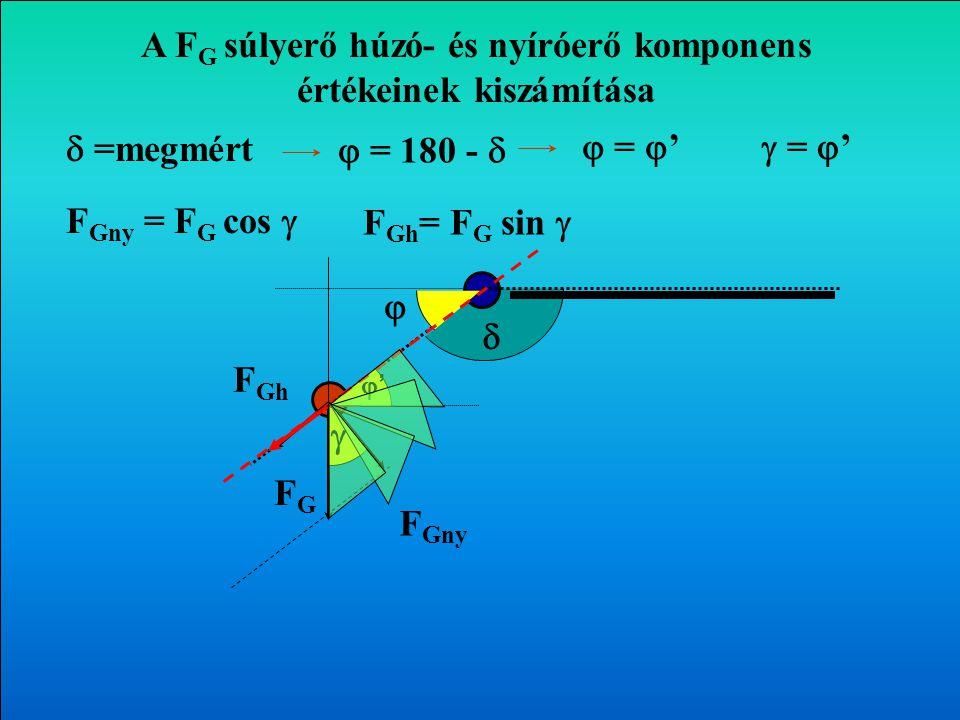    =mért  = 180 -  A végtagok súlyerejének hatása az izületekre FGFG F Gny F Gh Transzverzális sík 
