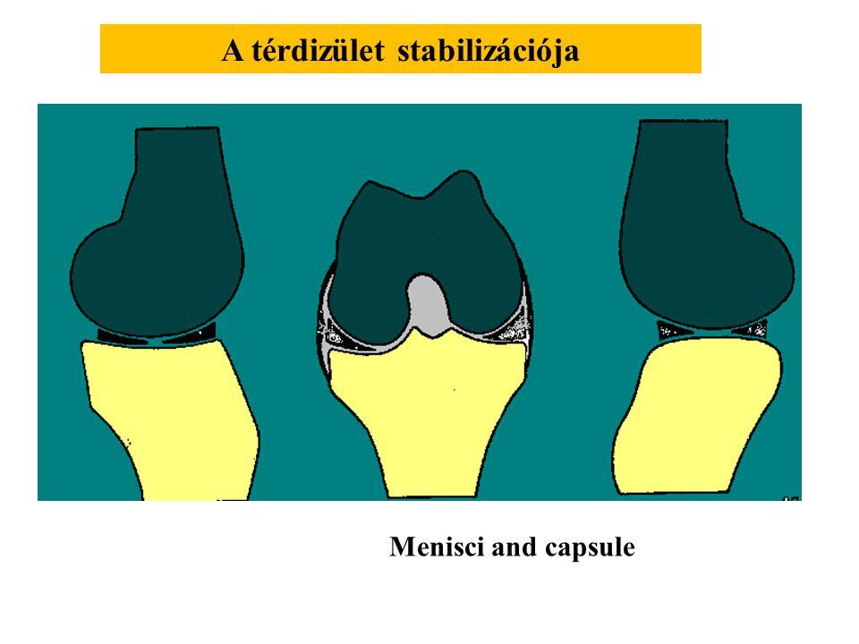 Transzlációs mozgás a térdízületben Mediális Laterális 6 mm 12 mm