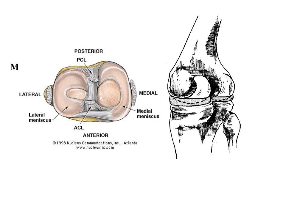 A térdizület stabilizációja Menisci and capsule