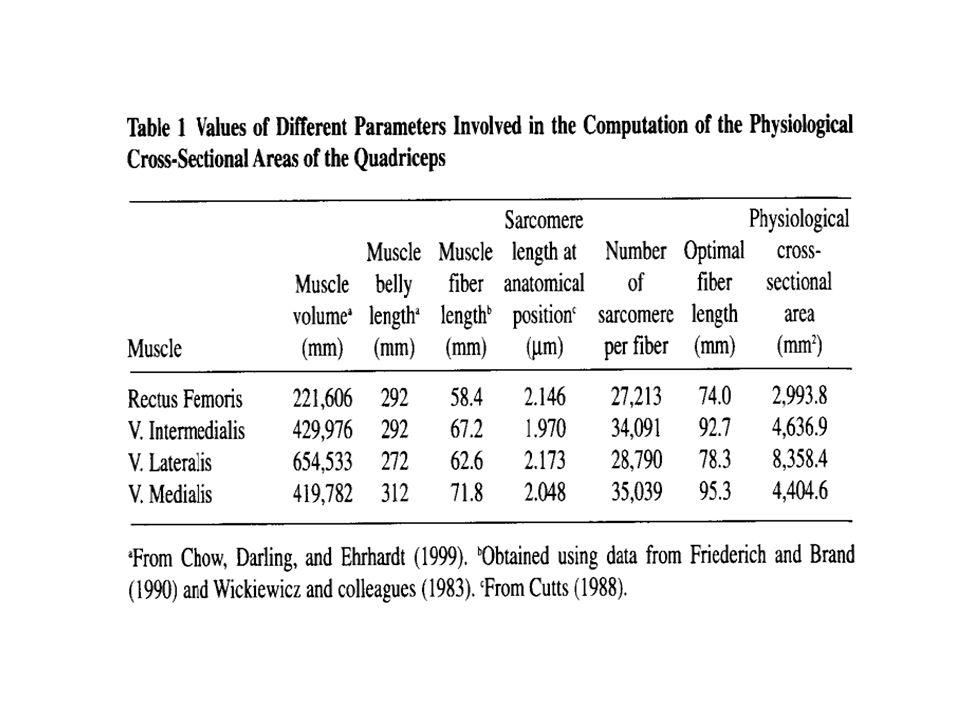 J. Appl. Biomechanics 1999 ; izomhosszszámítás.pdf