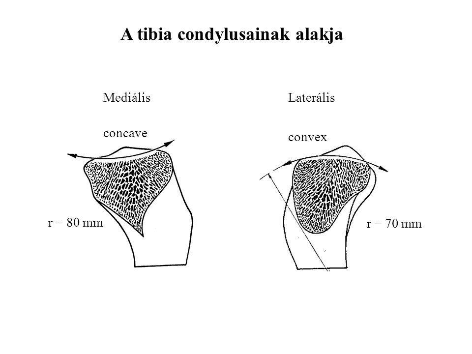 concave r = 80 mm convex r = 70 mm MediálisLaterális A tibia condylusainak alakja