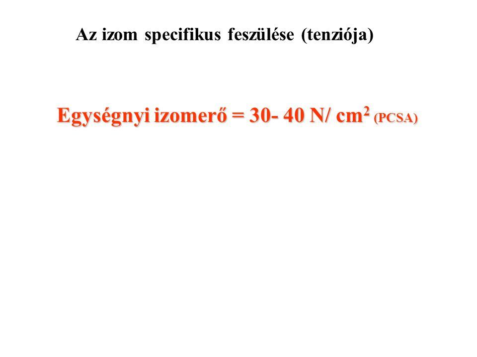 Jellemzők izom rosthossz hosszarány pennáltság PCSA (mm) szög(rad) (cm 2 ) Sartorius4480.880.001.7 Vastus lat.720.23 0.12 (6.7) 30.6 Gastr. med.370.16