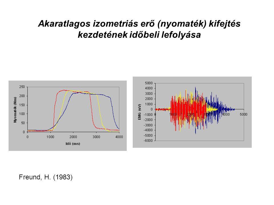 Egységnyi izomerő = 30- 40 N/ cm2 (PCSA) Az izom specifikus feszülése (tenziója)
