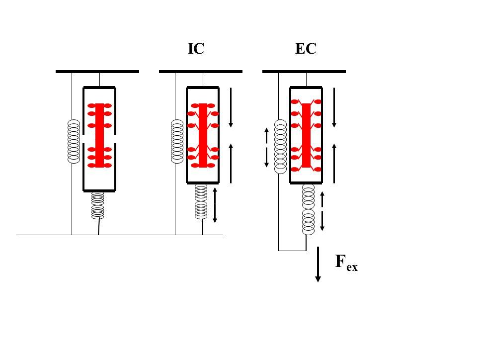 Izometriás F ex EC Maximálisan ingerelt izolált izom