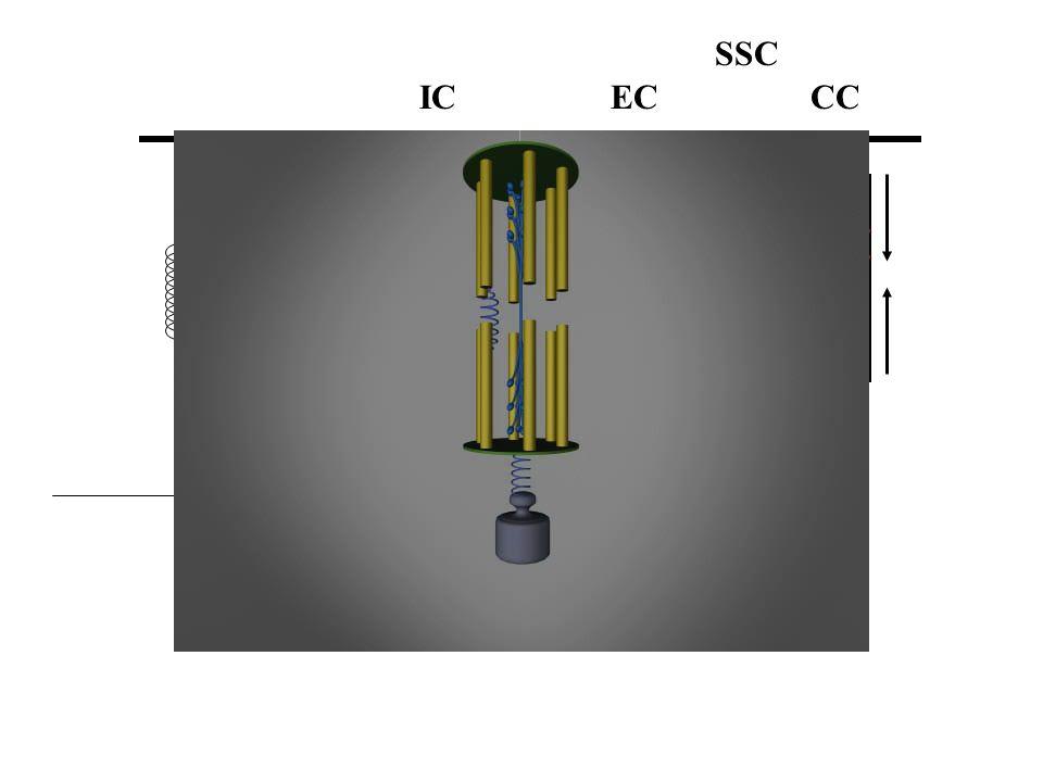 A külső erő munkát végez az izmon elhasználva a rendelkezésére álló energiát, amelynek egy része az izomban, mint elasztikus energia tárolódik. Mivel