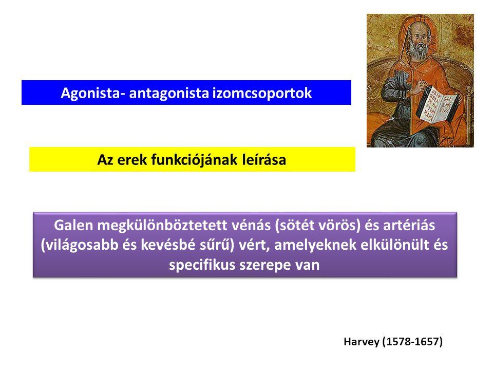 Galen, Galenus Marcus (130-201) Marcus Aurelius On the Use of the Parts of the Human Body Az első kineziológiai tankönyvnek tekinthető Az agy kontroll