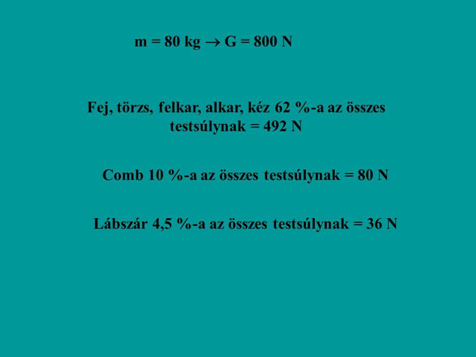 Fej, törzs, felkar, alkar, kéz 62 %-a az összes testsúlynak = 492 N m = 80 kg  G = 800 N Comb 10 %-a az összes testsúlynak = 80 N Lábszár 4,5 %-a az összes testsúlynak = 36 N