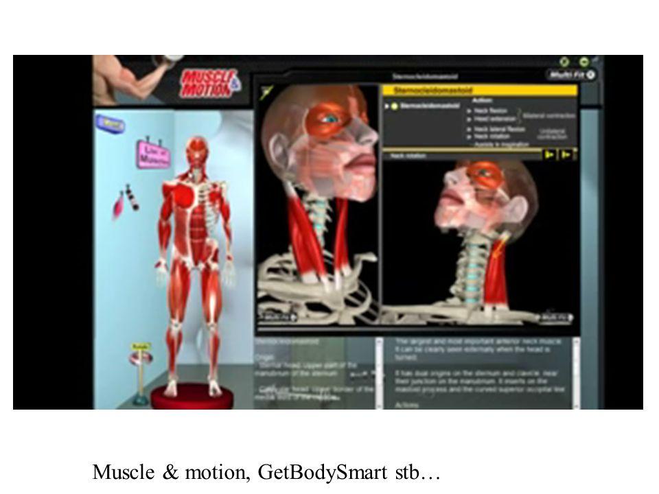 MOZGÁSTERJEDELEM Vállöv-vállízületi mozgásterjedelem megkülönböztetendő