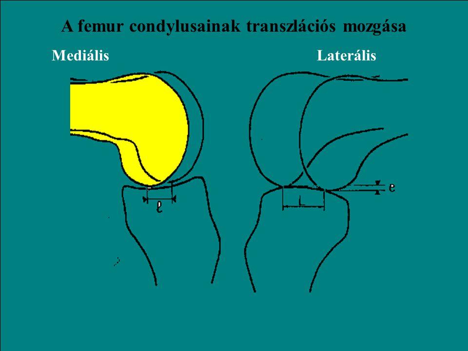konkáv r = 80 mm konvex r = 70 mm MediálisLaterális A tibia condylusainak alakja