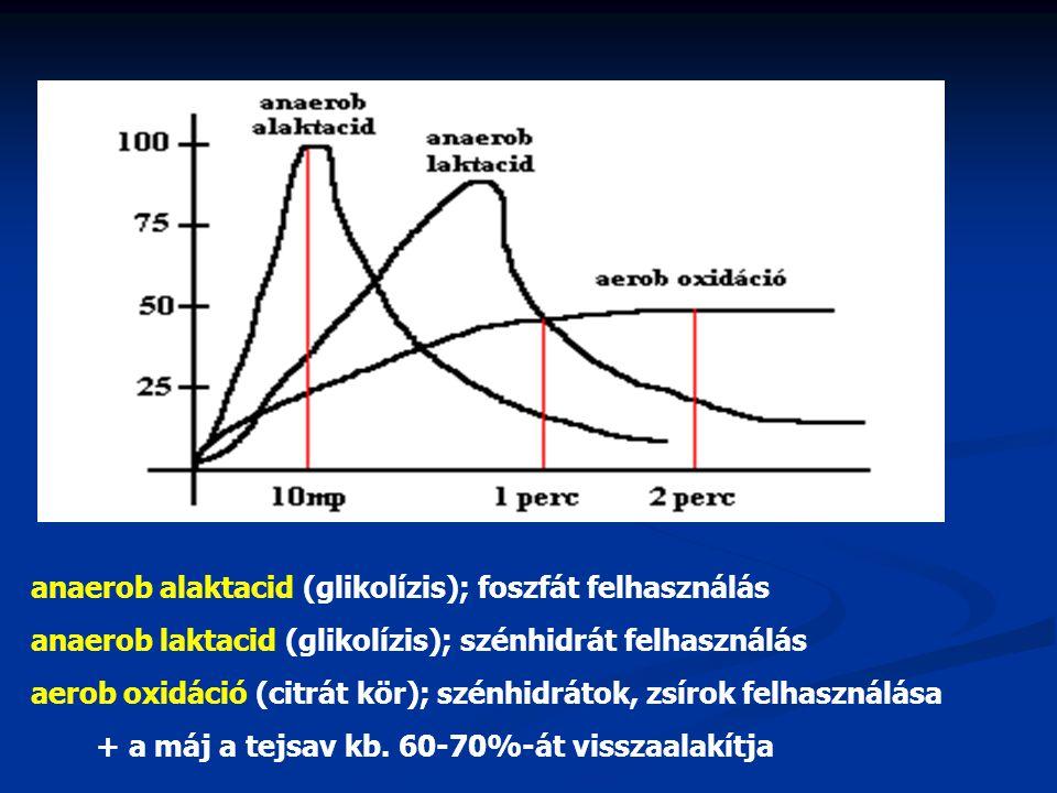 + a máj a tejsav kb. 60-70%-át visszaalakítja anaerob alaktacid (glikolízis); foszfát felhasználás anaerob laktacid (glikolízis); szénhidrát felhaszná