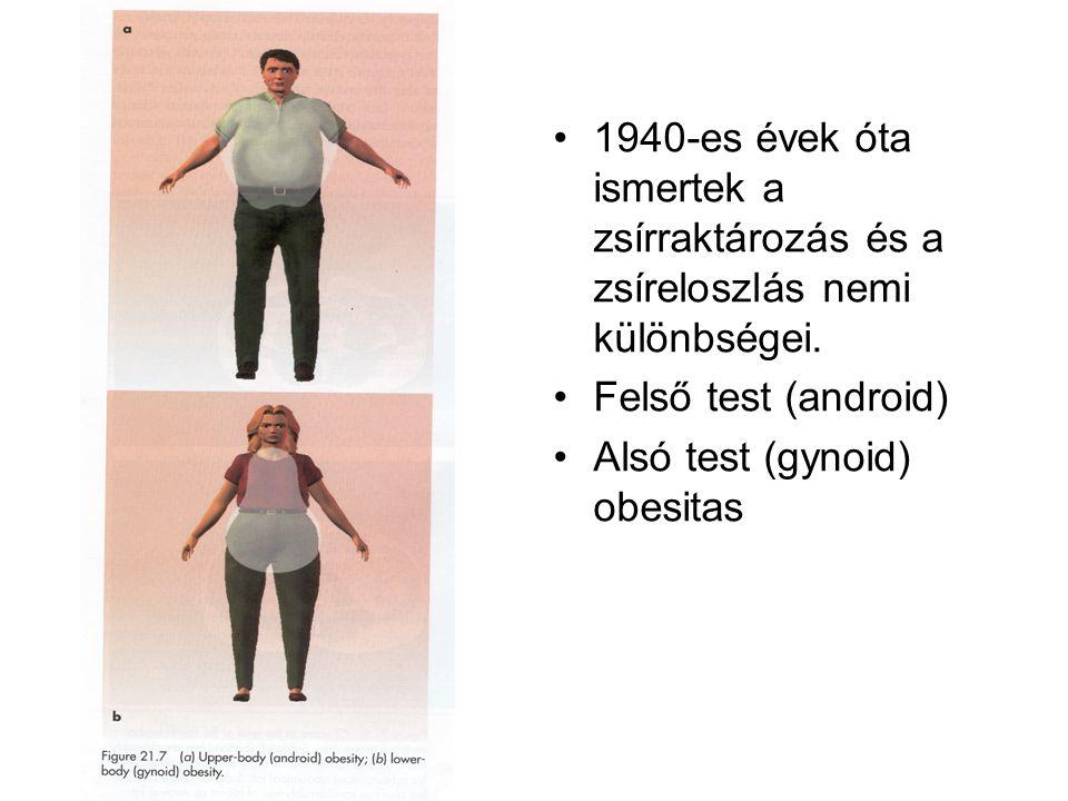 1940-es évek óta ismertek a zsírraktározás és a zsíreloszlás nemi különbségei. Felső test (android) Alsó test (gynoid) obesitas