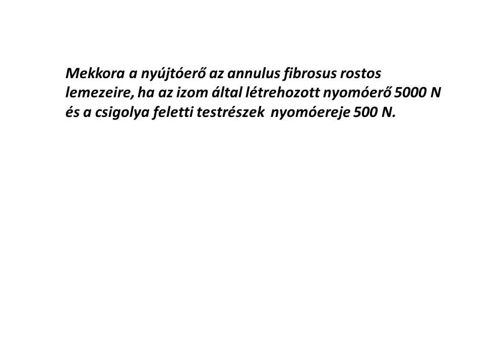 Mekkora a nyújtóerő az annulus fibrosus rostos lemezeire, ha az izom által létrehozott nyomóerő 5000 N és a csigolya feletti testrészek nyomóereje 500 N.
