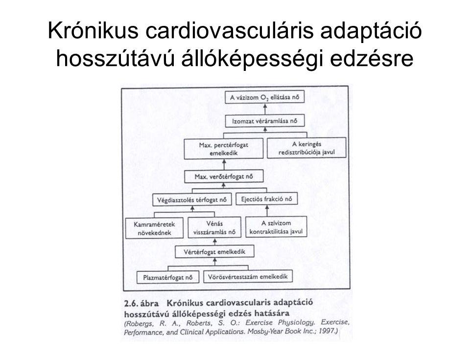Krónikus cardiovasculáris adaptáció hosszútávú állóképességi edzésre