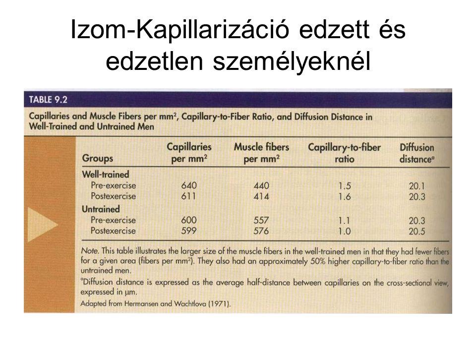 Izom-Kapillarizáció edzett és edzetlen személyeknél