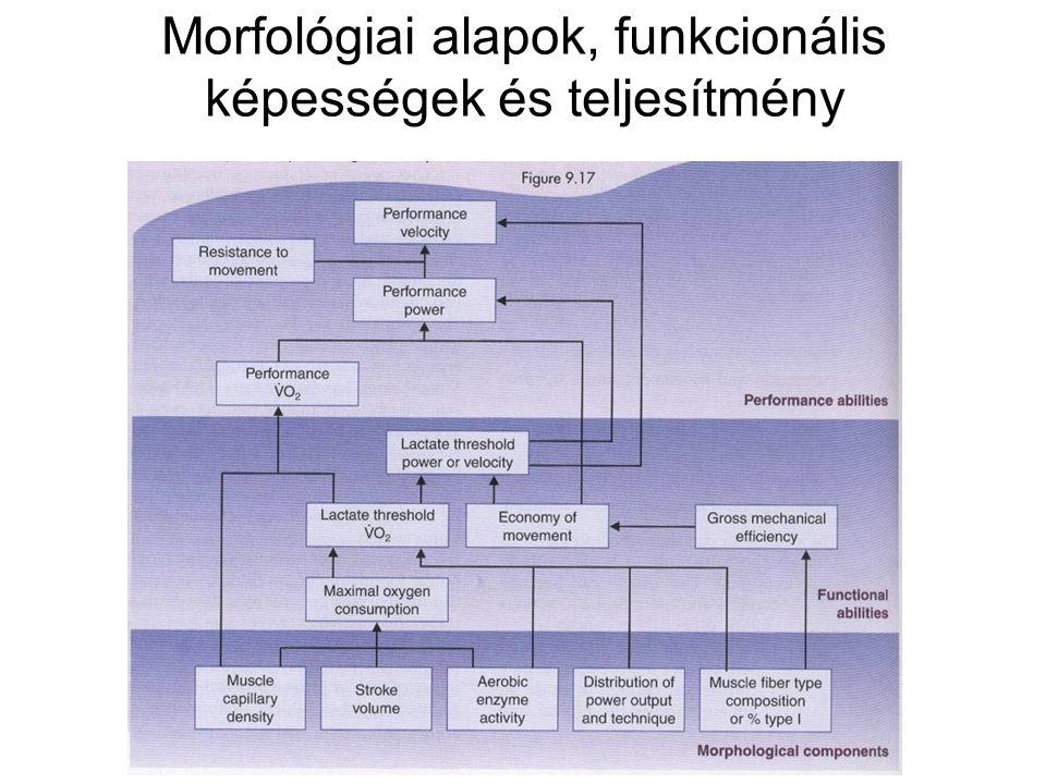 Morfológiai alapok, funkcionális képességek és teljesítmény