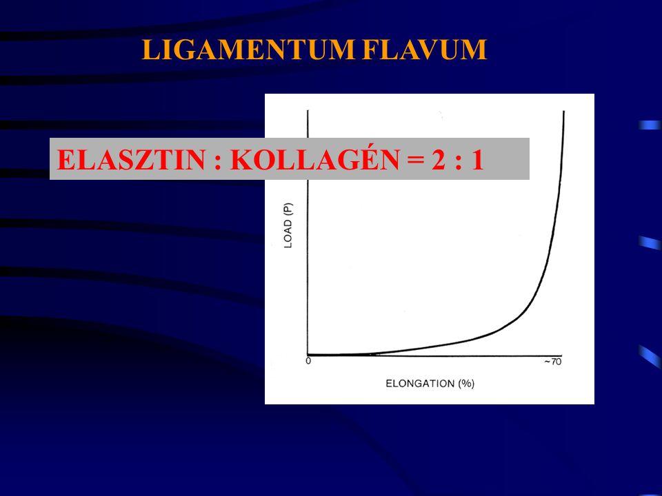 ELASZTIKUS ROSTOK ÉS ELASZTIN 2%-az inak szárazanyag tartalmának nem kollagén fehérje, hanem elastin.