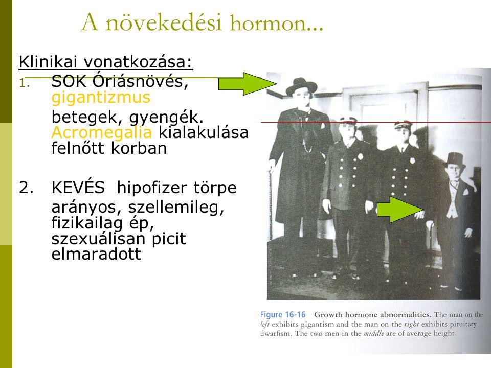 A növekedési hormon... Klinikai vonatkozása: 1. SOK Óriásnövés, gigantizmus betegek, gyengék. Acromegalia kialakulása felnőtt korban 2.KEVÉS hipofizer