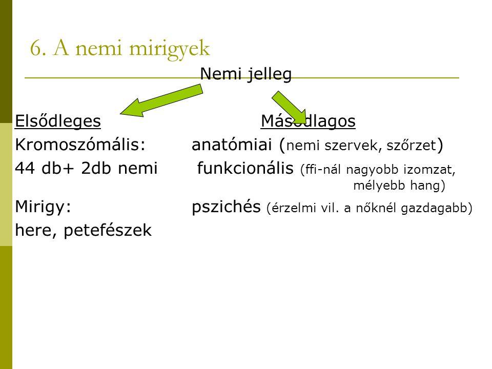 6. A nemi mirigyek Nemi jelleg Elsődleges Másodlagos Kromoszómális: anatómiai ( nemi szervek, szőrzet ) 44 db+ 2db nemi funkcionális (ffi-nál nagyobb