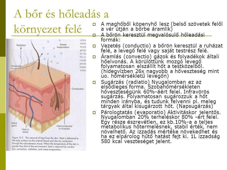A bőr és hőleadás a környezet felé  A maghőből köpenyhő lesz (belső szövetek felől a vér útján a bőrbe áramlik)  A bőrön keresztül megvalósulő hőlea