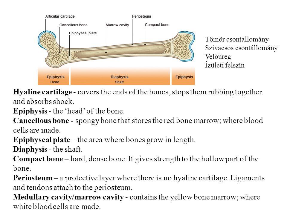 FiatalIdős Osteoporosis