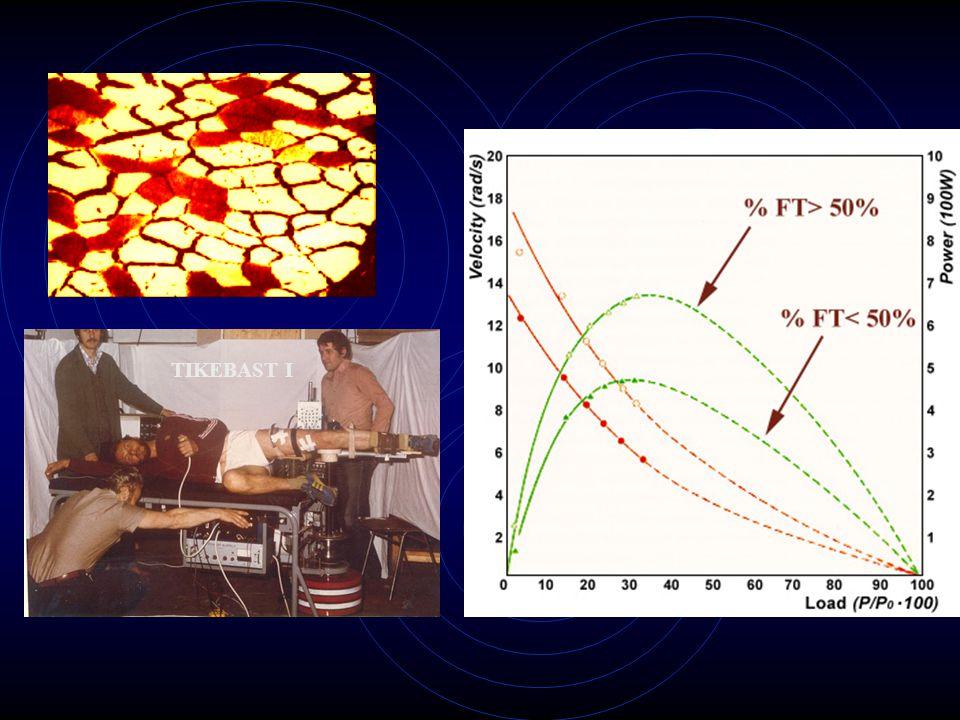 Az erő-sebesség-teljesítmény kapcsolatot befolyásoló tényezők 1.Az izomrövidülés hossza 2.Izom architectura 3.Rostösszetétel 4.Nem 5.Hőmérséklet 6.Fáradás 7.Edzettségi állapot 1.Az izomrövidülés hossza 2.Izom architectura 3.Rostösszetétel 4.Nem 5.Hőmérséklet 6.Fáradás 7.Edzettségi állapot