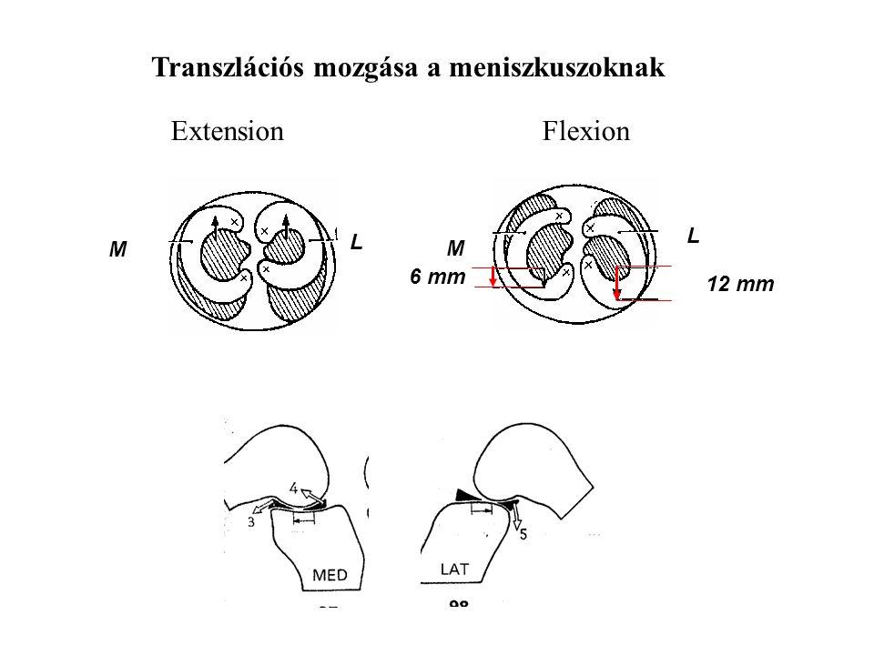 Transzláció MedialLateral