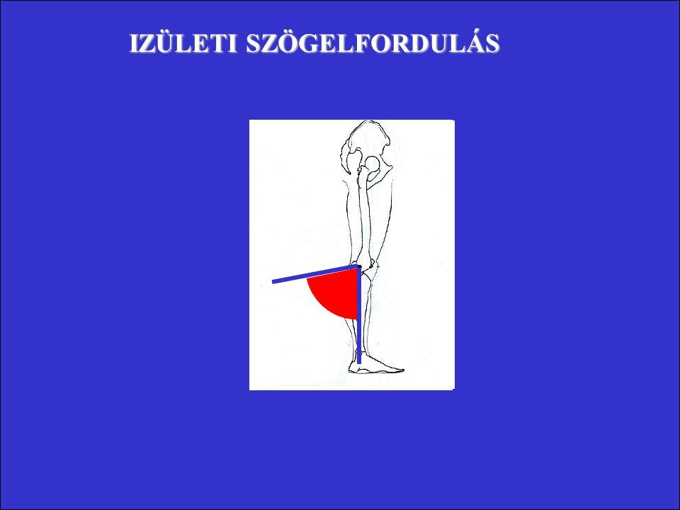 Kiegészítő (belső) 180° Izületi szög Anatómiai (külső) 0° Kiegészítő (belső) 100° Anatómiai (külső) 80°