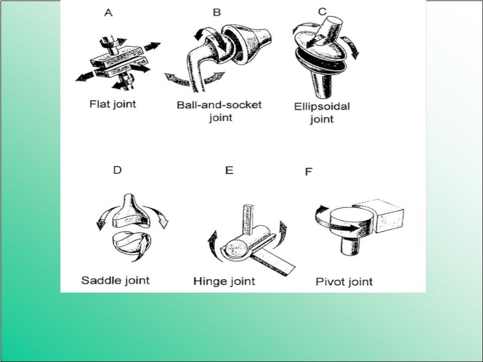 Az izületek típusai 1. Két csont (térd) 2. Több csont (lábközép csontjai) egy tengelyű (henger) Két tengelyű (elliptikus, tojás) Három tengelyű ( gömb