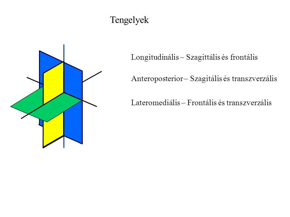 Transzverzális sík G G ny GkGk  F ny = F iny + (-G ny )  F k = F ik + G k FiFi F iny F ik