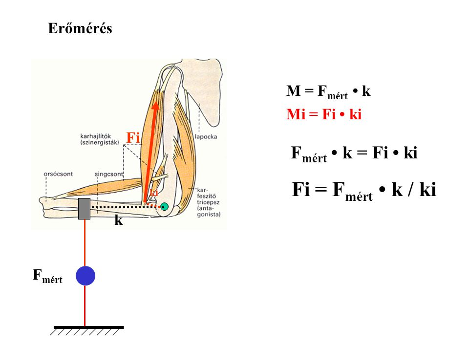 r m m= 5 kgr= 0,2 m t= 0,05 s  = 45  = 0,785 rad  = 900  /s = 15,7 rad/s Forgatónyomaték (M) Dinamikus körülményben 2011. 02. 23