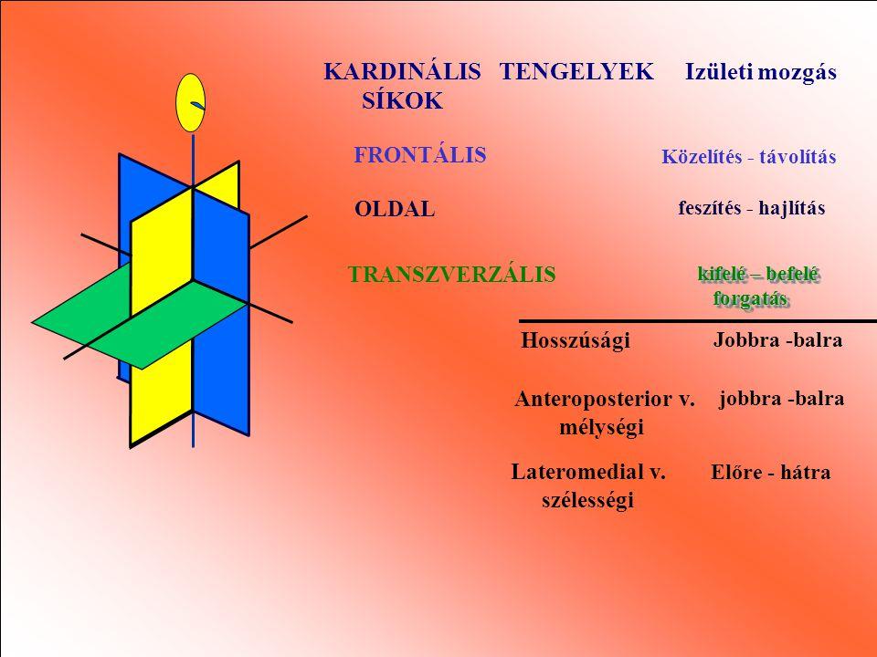 Kardinális síkok és tengelyekHelyi referencia rendszer
