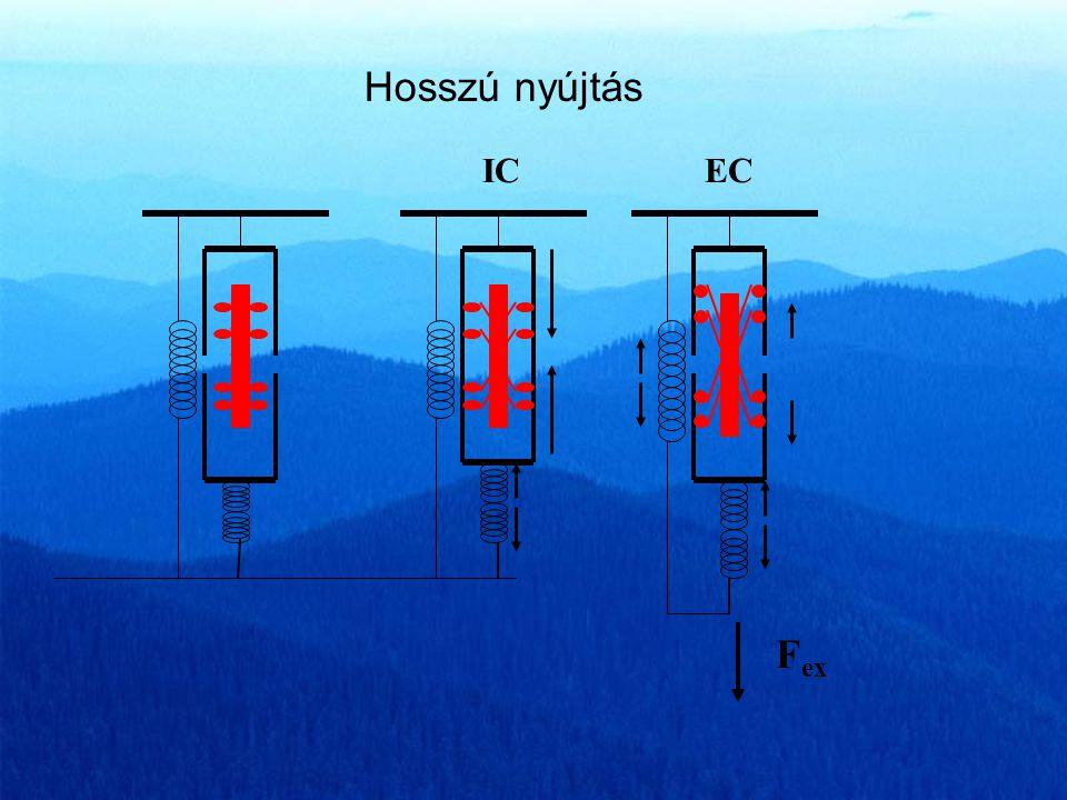 Az izomfeszülés növekedésének okai a passzív elasztikus elemek ellenállása Új motoros egységek bekapcsolódása A bekapcsolt motoros egységek tüzelési f