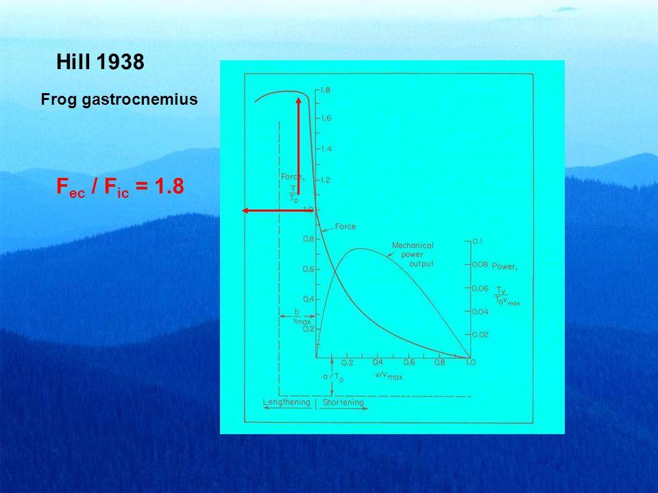 Hill 1938 F ec / F ic = 1.8 Frog gastrocnemius